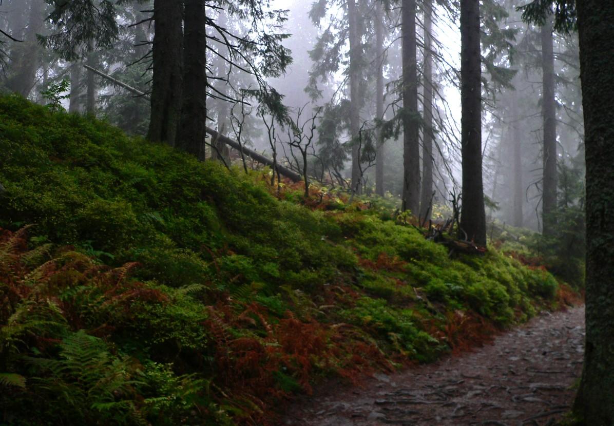 Babia Góra - mgła...