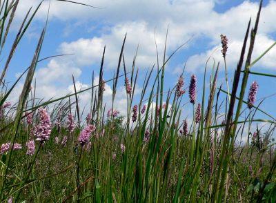 Co w trawie piszczy