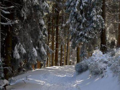 Zimowe, leśne klimaty
