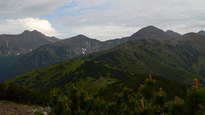 Grześ w Tatrach Zachodnich